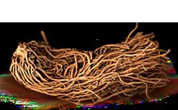 Экстракт корня ластовня